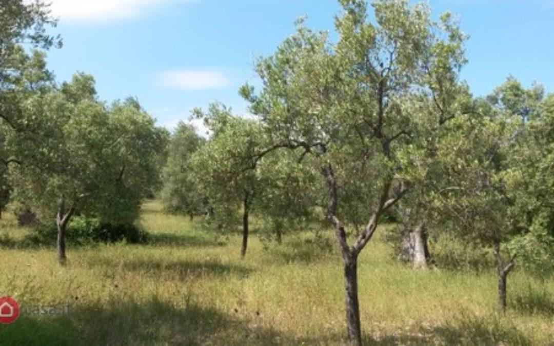 Terreno agricolo in VENDITA a Vieste
